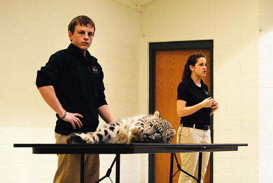 Parka the Snow Leopard - Walk On The Wild Side 2014 - Fund Raiser for Wildlife Haven