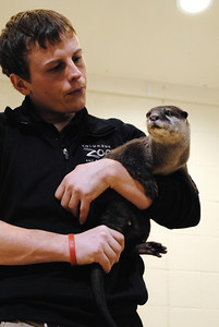 Asian Small-clawed Otter - Walk On The Wild Side 2014 - Fund Raiser for Wildlife Haven